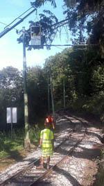 Bäume wären fast in die Fahrleitung der Linie 6 gestürzt